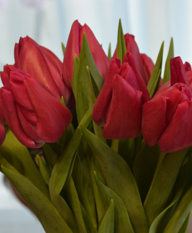 Где купить букет тюльпанов для выгонки, эксклюзивные букеты